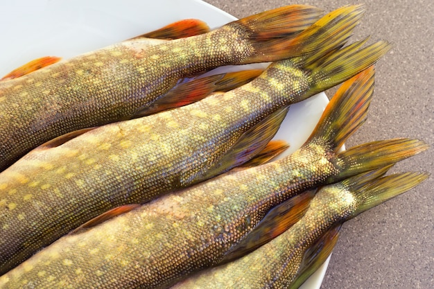 Pike tails lying on a plate. freshwater fish. fresh pike. predatory river fish.