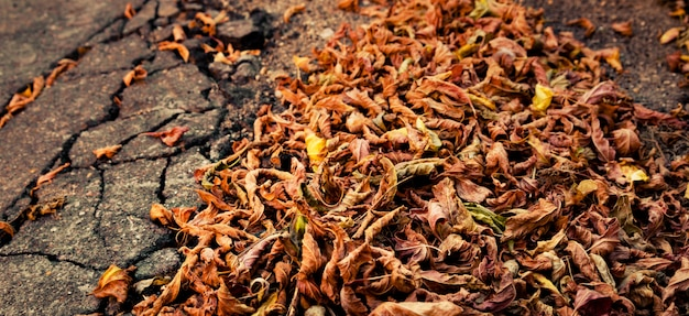 Pile of autumn dried leaves.