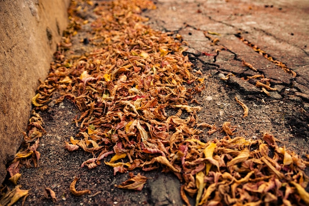 Pile of dried leaves.