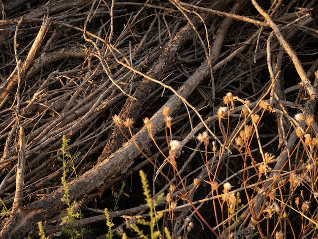 A pile of dry twigs as a background. wooden background.