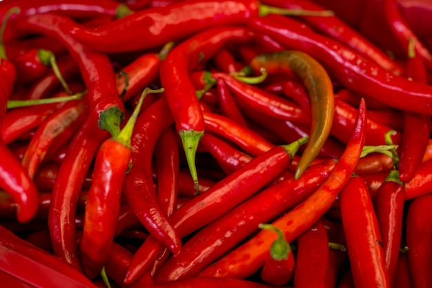 Pile of fresh red chilli peppers
