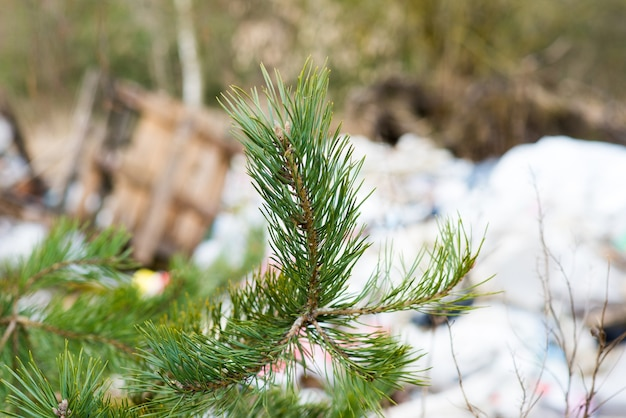 Pile of garbage dump in the forest, nature environment problems. global earth pollution.