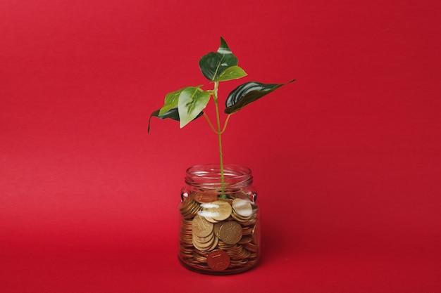 밝은 빨간색 벽 배경에 분리된 녹색 식물 새싹이 있는 유리병에 금화를 쌓아두세요. 돈 축적 투자 은행 또는 비즈니스 서비스, 부 개념. 공간 광고를 조롱하십시오.