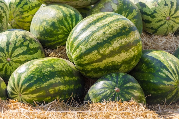 Pile of green organic ripe watermelons in the farmers market,