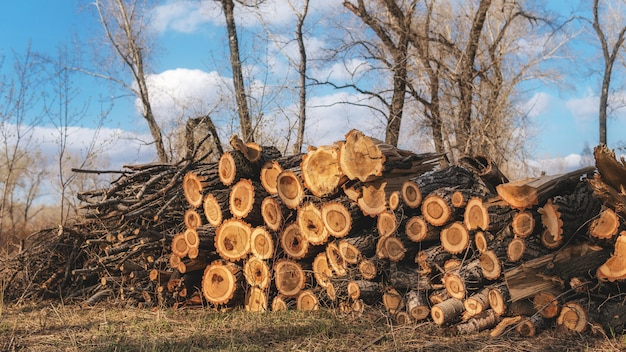 Pile of logs in the forest. logs at a sawmill.