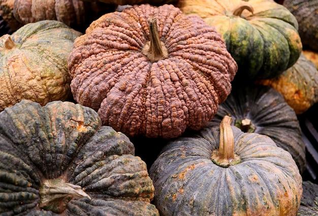 Pile of multi-color rough peel pumpkins, texture,
