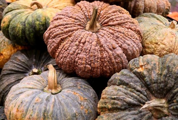Pile of multi-color rough skin pumpkins