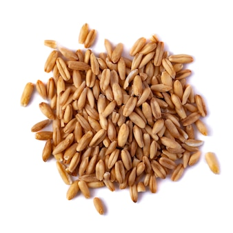 A pile of oat seeds isolated on white background. top view