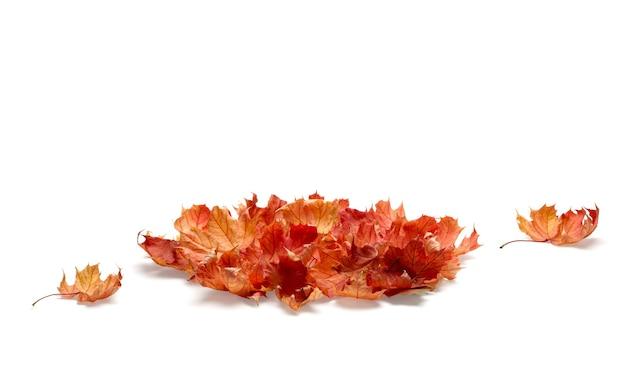 Куча осенних листьев, изолированные на белом фоне