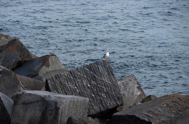 海岸の防波堤石の山