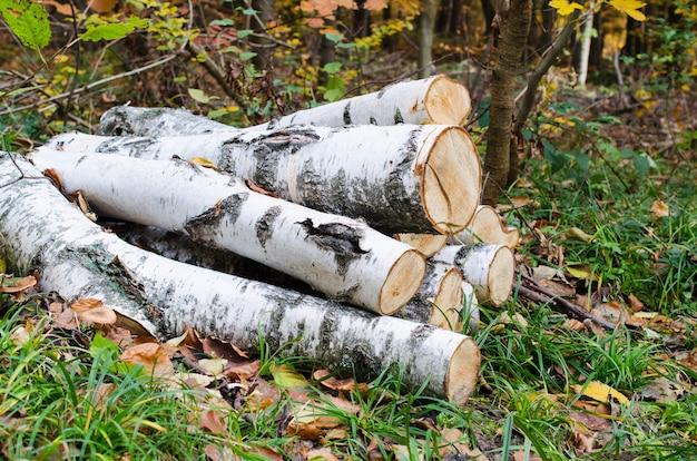 薪を収穫する秋の森林伐採材木産業における乾燥した白樺の丸太の山