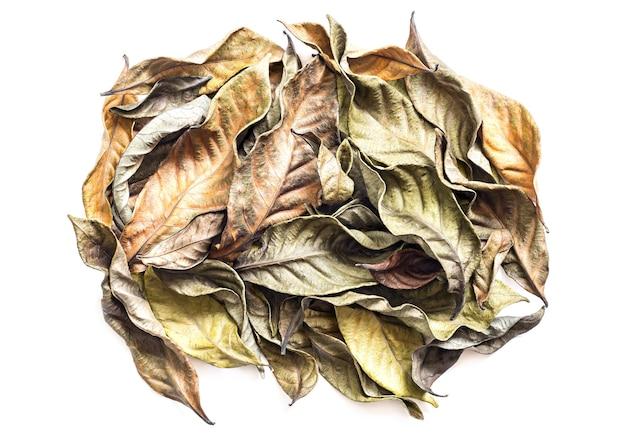 흰색 절연 마른 나뭇잎 더미