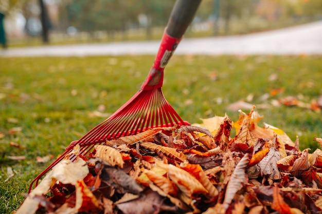 緑の草の上に紅葉の山。秋の風景。寒い季節。赤いレーキのかき集めの葉。