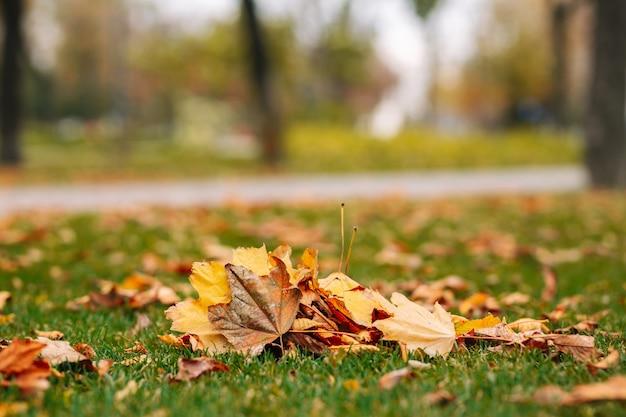 緑の草の上に紅葉の山。秋の風景。寒い季節。