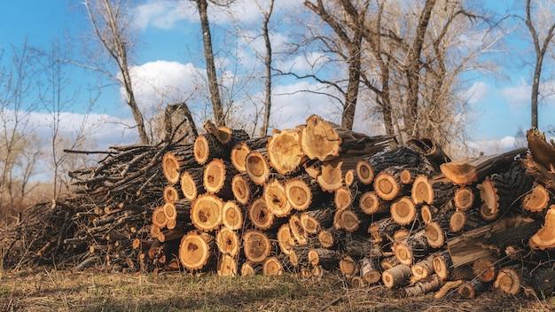 森の中の丸太の山。製材所でログ。