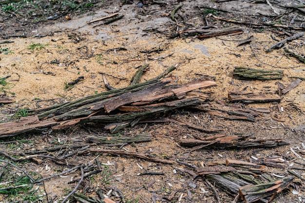 Куча бревен, палочек и коры, другие куски дерева от упавшего дерева снаружи окружены другими органическими и разлагающимися.