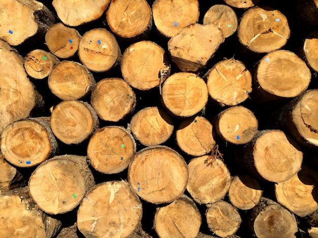 木材加工産業で板に切断する準備ができている松の丸太の山