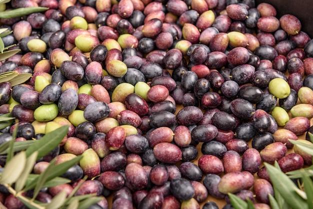 Куча сырых черных и зеленых оливок с листьями.