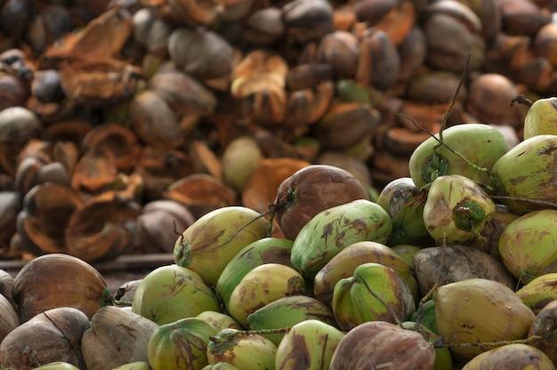 태국 코코넛 농장의 수확에서 익은 코코넛 더미. 버진 코코넛 오일 및 코코넛 밀크 제조 산업을위한 원료. 프리미엄 사진