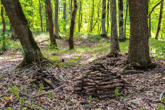 森の中に積み上げられた薪の山