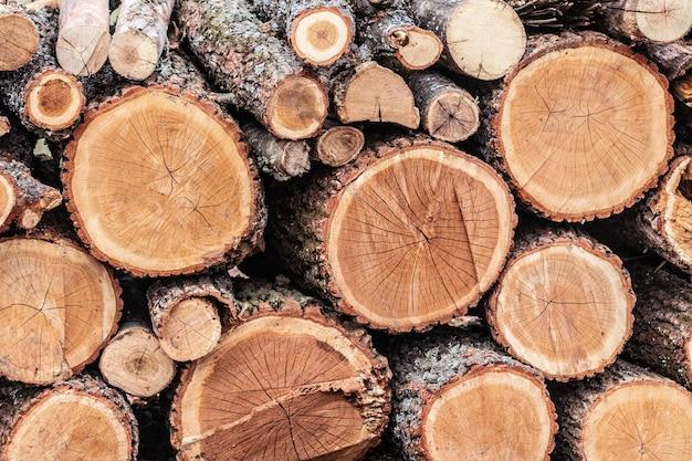 Куча пней деревянных бревен на зиму. лесозаготовка лесной промышленности.
