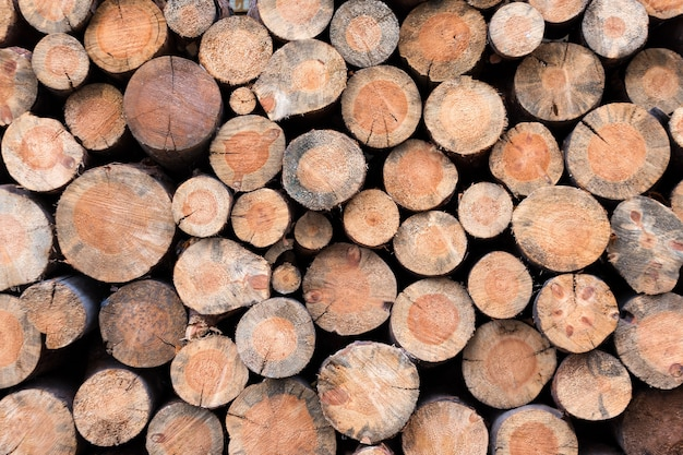 서로의 위에 함께 쌓인 나무 통나무 더미. 천연 나무, 배경으로 톱질 한 통나무. 누적 된 목재 통나무의 벽입니다.
