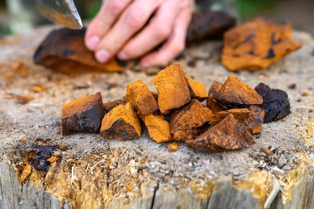 男性の手の斧を背景に、スライスして皮をむいたチャガキノコ白樺菌の山片を積み上げます。一歩一歩