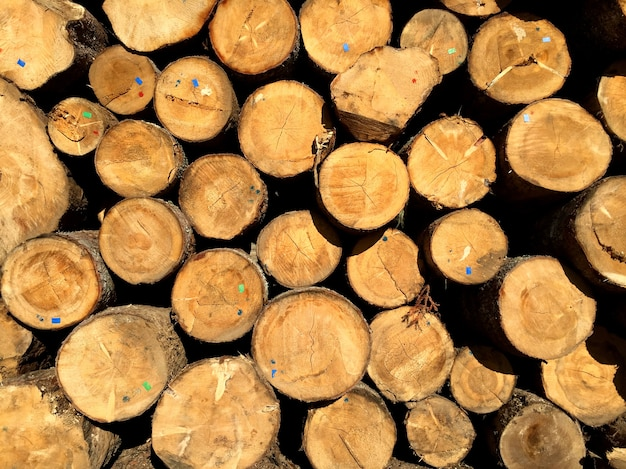 Pile of pine logs ready for cutting into planks in wood processing industry