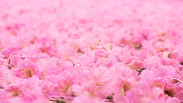 Pile of pink flower on floor.