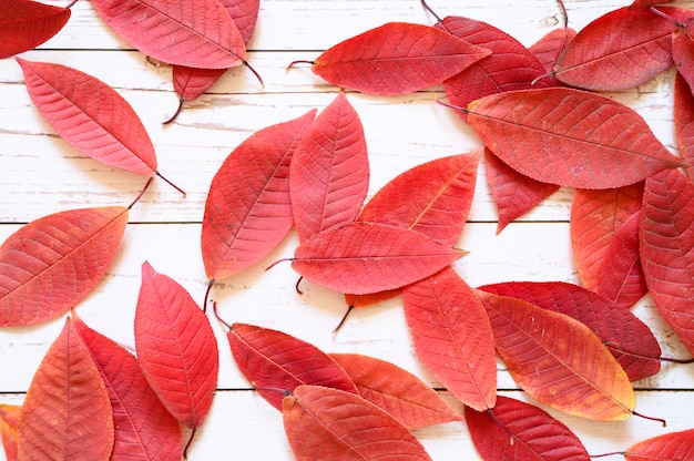 A pile of red autumn fallen leaves