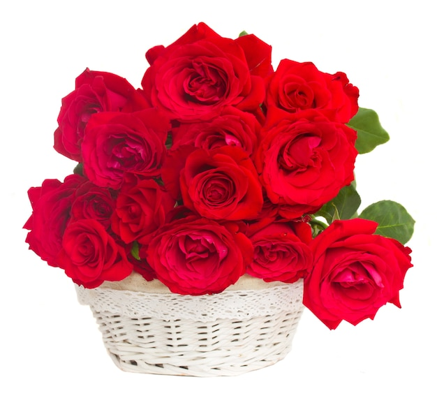 Pile  of scarlet red  fresh roses  in basket  isolated