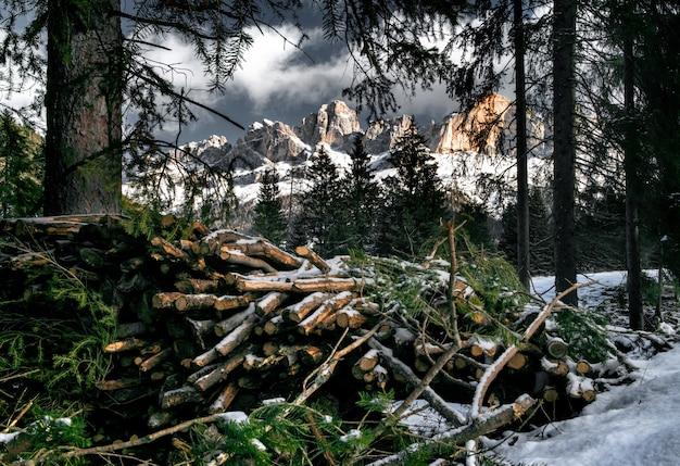 Catasta di alberi in legno in un bosco innevato circondato da scogliere delle dolomiti