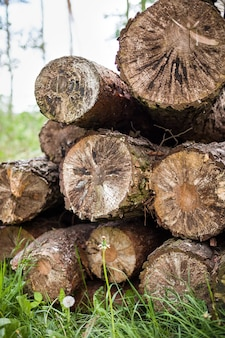 Pile of wood  texture background stack of wood cut old trees on the grass log fire wood