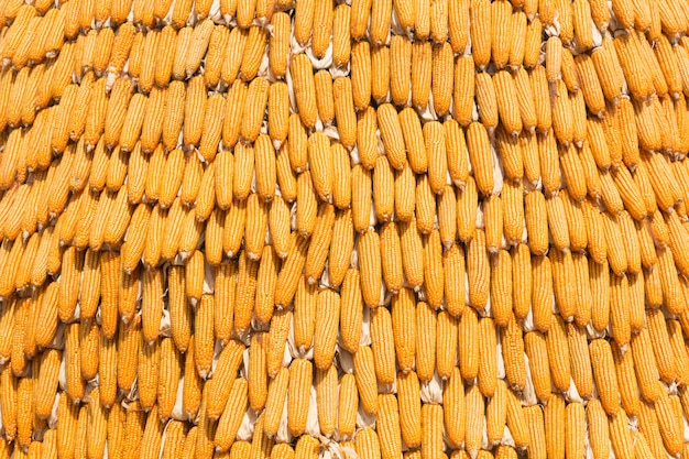 Pile of yellow dried corns use for background