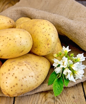 A pile of yellow potato tuber with a flower on a sacking on a wooden boards background
