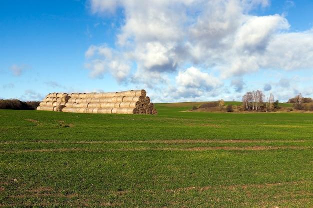 Сложены соломы стога сена после сбора урожая зерновых.