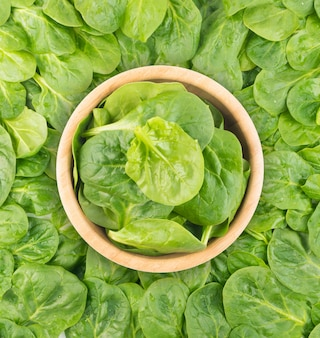ピナシアオレラセア背景。緑豊かな野菜フラットレイ