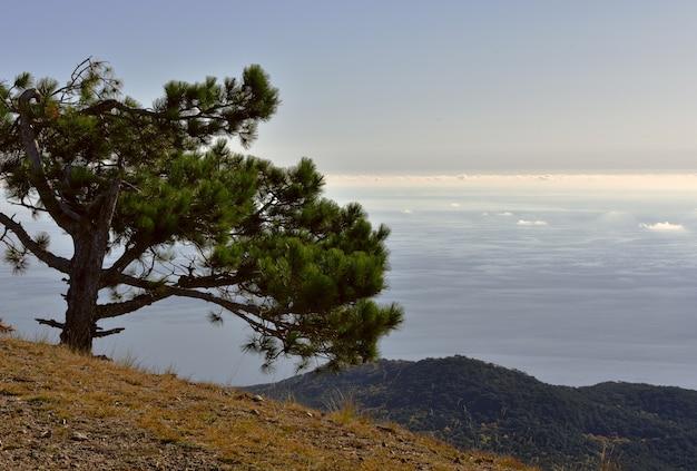 雲と海の上の松