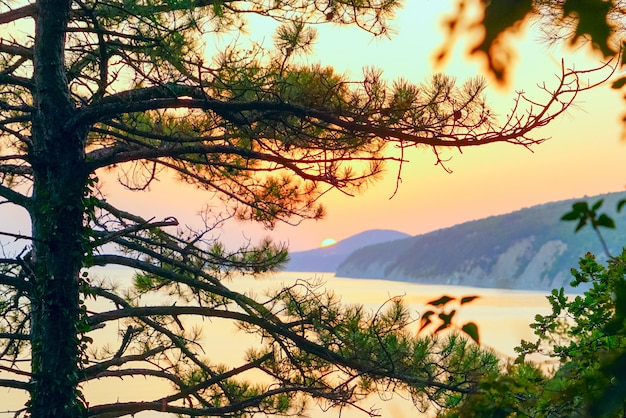 Pine on the background of a bright sunset over the sea in the mountains.