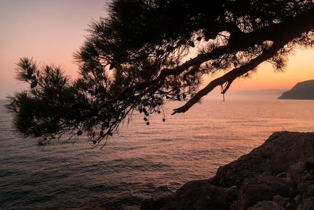 바위 해안에 바다의 배경에 일몰에 소나무 가지