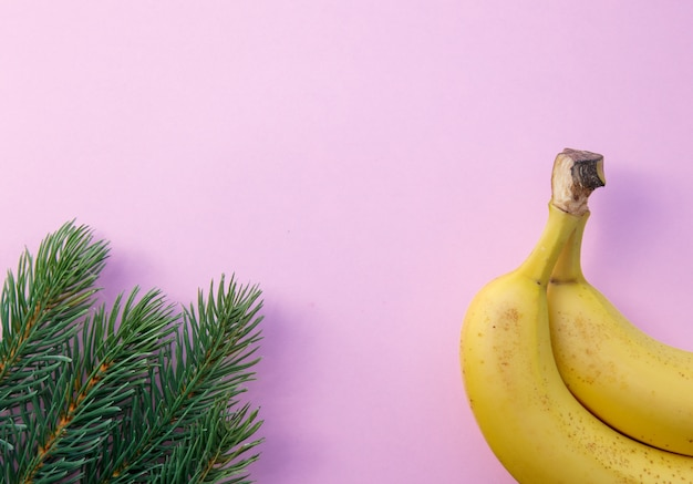 Pine branch and half of banana on pink background. christmas holiday concept
