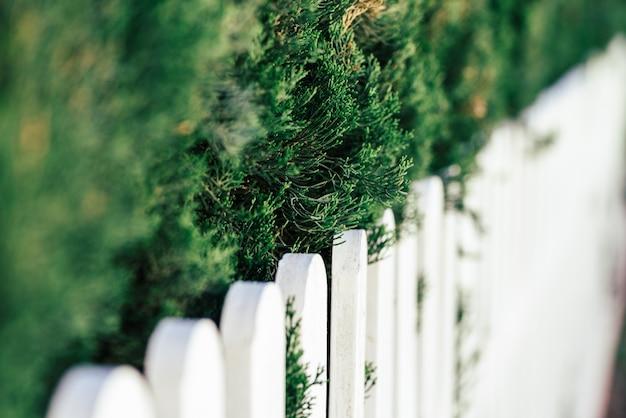 소나무 가지와 흰색 나무 울타리