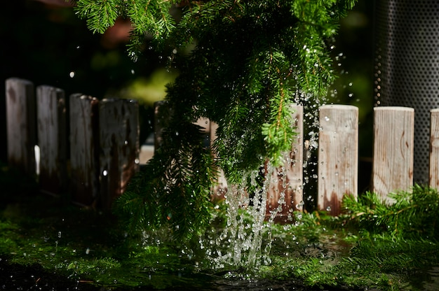 뜨거운 튜브 스파 물에 뜨거운 침엽수 근처 소나무 가지
