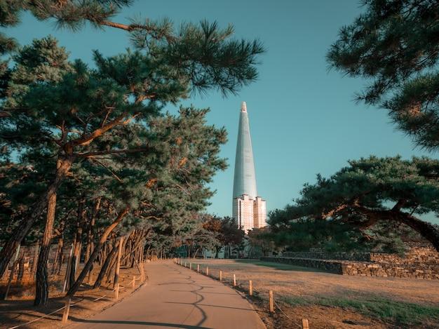 뒤에 아름 다운 타워와 소나무 가지