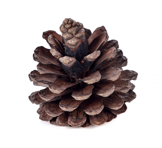 Pine cone isolated on white