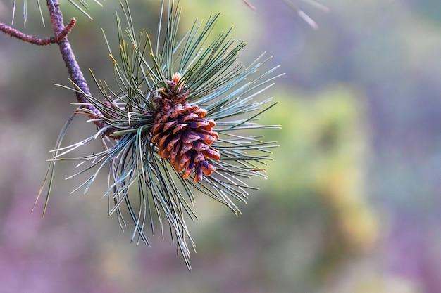 木の枝に松ぼっくり