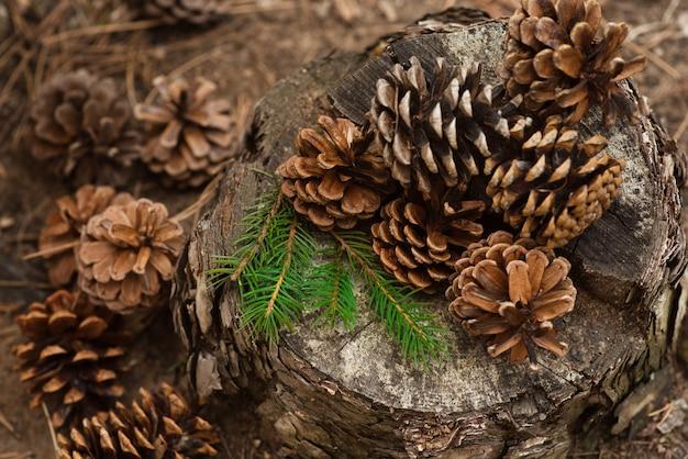 松ぼっくりとトウヒの枝が森の切り株にあります。新年とクリスマスの背景、はがき。冬の雰囲気。美しい大きなバンプのクローズアップとヴィンテージの背景