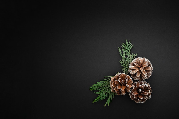 Pine cones and branches on dark background