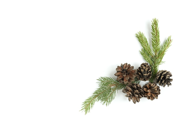 Pine cones isolated on a white surface
