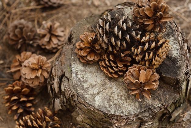 松ぼっくりは森の切り株にあります。新年とクリスマスの背景、はがき。冬の雰囲気。美しい大きなバンプのクローズアップとヴィンテージの背景